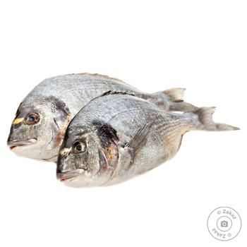 Fish gilt-head bream fresh