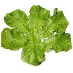 Листья салата (цена за пучок - 1шт)