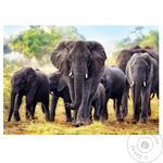 Іграшка пазл Трефль 1000 Африканські слони 10442 И424