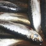 Рыба иваси слабосоленая