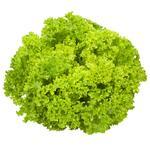Салат Лолло Бионда зеленый