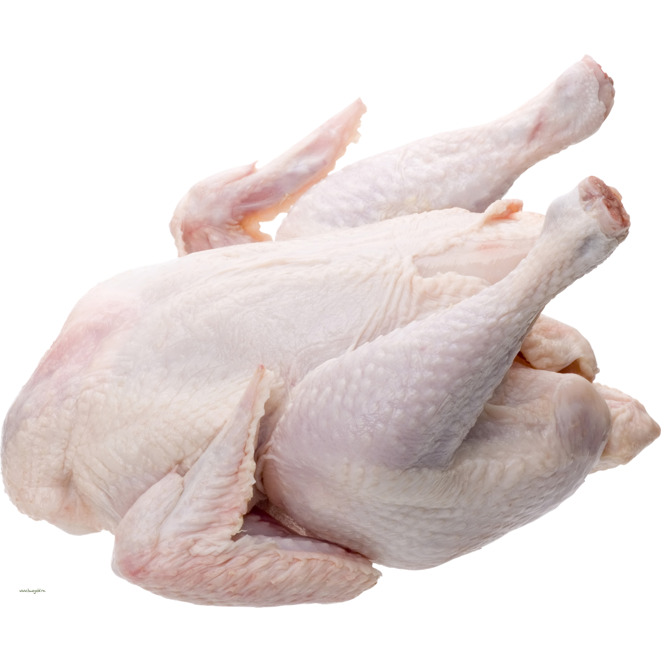 Poultry Fresh  Meat, Fish, Poultry  Fresh Meat -9480