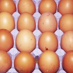 Egg Avangard agroholding llc brown c1 10pcs 600g Ukraine