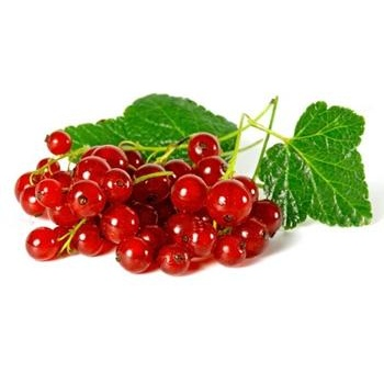 berry redcurrant fresh