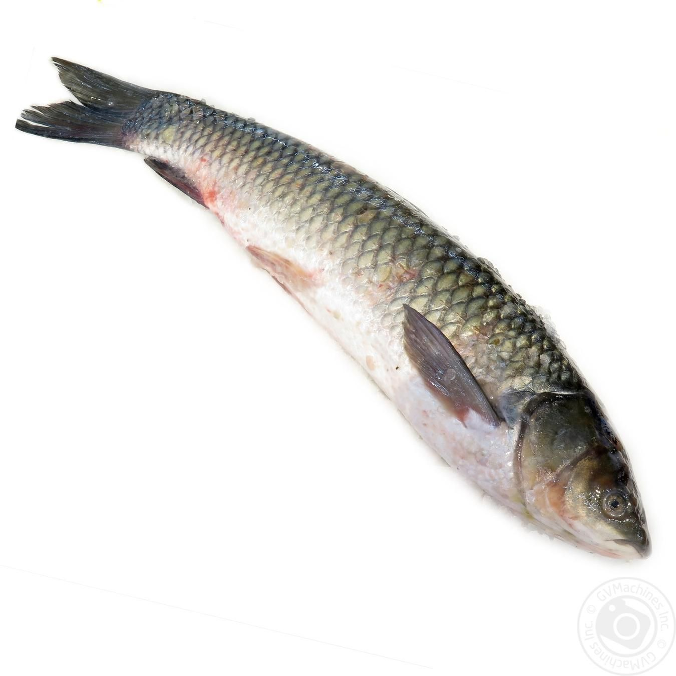 Fish grass carp fresh meat fish poultry fresh fish for White amur fish