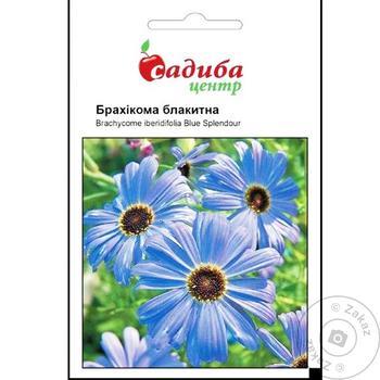 Sadyba Tsentr Blue Brachycoma Seeds 0.1g