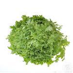 Зелень салат салат фрізе свіжа