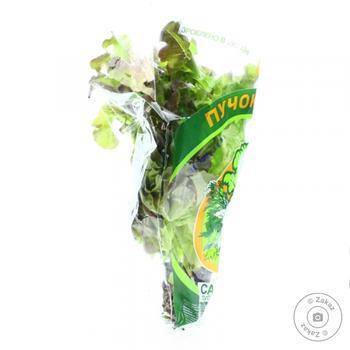 Салат Пучок-Свежачок дуболистый в горшке - купить, цены на Novus - фото 2