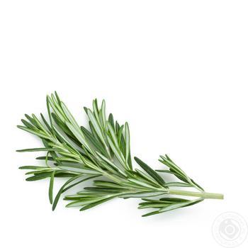 Greens rosemary fresh