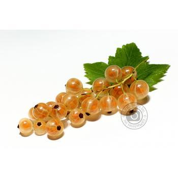 ягода красная смородина белое свежая