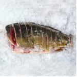 Стейк коропа охолоджений ваг