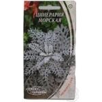 Насіння Квіти Цинерарія морська Семена Украины 1г