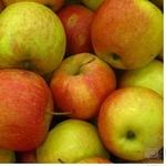 Фрукт яблука свіжа Україна