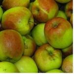Fruit apple ligol Perekrestok fresh Ukraine