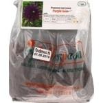 Цибулина Жоржина кактус.Purple Gem 1шт
