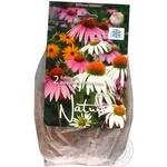 Seed echinacea Ukraflora